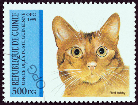 GUINEA - CIRCA 1995  A stamp printed in Guinea from the  Cats   issue shows Red tabby, circa 1995