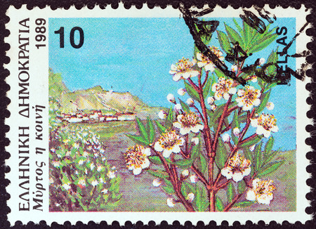 true myrtle: GREECE - CIRCA 1989  A stamp printed in Greece from the  Wild Flowers  issue shows common myrtle  Myrtus communis , circa 1989   Editorial