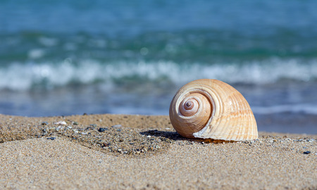 Sea shell on sandy beach  photo