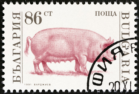 estampilla: BULGARIA - CIRCA 1991: A stamp printed in Bulgaria from the Farm Animals  issue shows Domestic pig (Sus domesticus), circa 1991.  Editorial