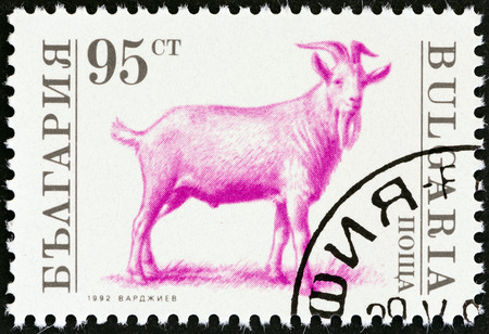 hircus: BULGARIA - CIRCA 1992: A stamp printed in Bulgaria from the Farm Animals  issue shows Billy goat (Capra aegagrus hircus), circa 1992.
