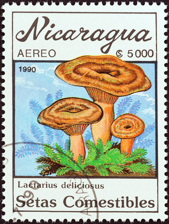 estampilla: NICARAGUA - CIRCA 1990: A stamp printed in Nicaragua from the \Mushrooms \ issue shows Lactarius deliciosus, circa 1990. Editorial