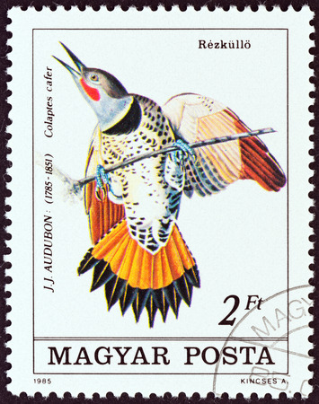 flicker: HUNGARY - CIRCA 1985: A stamp printed in Hungary from the Birth Bicentenary of ornithologist John J. Audubon  issue shows Common Flicker (Colaptes cafer), circa 1985.