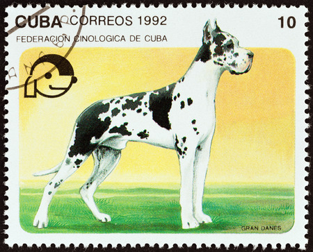 deutsche dogge: CUBA - CIRCA 1992: A stamp printed in Cuba from the Dogs  issue shows Great dane, circa 1992.