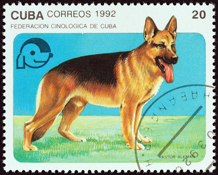 canid: CUBA - CIRCA 1992: A stamp printed in Cuba from the Dogs  issue shows German shepherd, circa 1992.