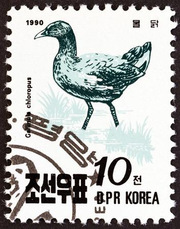 sello: NORTH KOREA - CIRCA 1990: A stamp printed in North Korea from the \\\Birds \\\ issue shows Common moorhen (Gallinula chloropus), circa 1990.