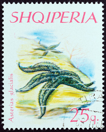 estampilla: ALBANIA - CIRCA 1966: A stamp printed in Albania from the \Echinoderms \ issue shows Warts Starfish (Asterias glacialis), circa 1966. Editorial