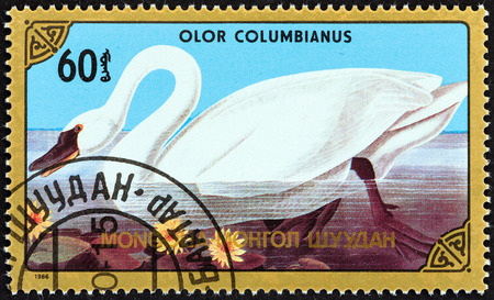 tundra swan: MONGOLIA - CIRCA 1986: A stamp printed in Mongolia from the \\\\\\\Birds \\\\\\\ issue shows Tundra swan (Olor columbianus), circa 1986.