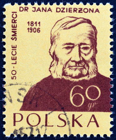 apiarist: POLAND - CIRCA 1956: A stamp printed in Poland issued for the 50th death anniversary of Jan Dzierzon shows apiarist Dr. Jan Dzierzon, circa 1956.