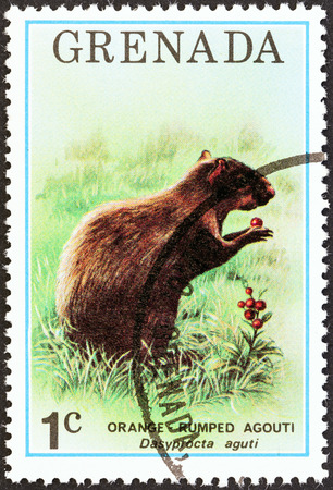 stempel: GRENADA - CIRCA 1976: A stamp printed in Grenada from the \\\\\\\Flora and Fauna \\\\\\\ issue shows an Orange rumped agouti, circa 1976.