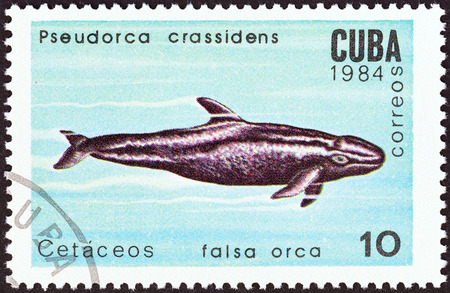 CUBA - CIRCA 1984: A stamp printed in Cuba from the \\\Whales and Dolphins \\\ issue shows False killer whale, circa 1984.
