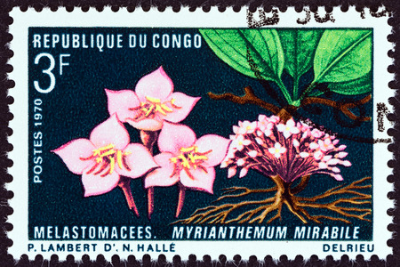 fauna: CONGO REPUBLIC - CIRCA 1970: A stamp printed in Congo from the Flora and Fauna issue shows Myrianthemum mirabile, circa 1970.