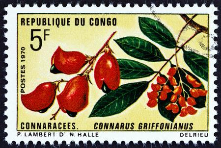 """fauna: CONGO REP�BLICA - CIRCA 1970: Un sello impreso en el Congo desde el tema """"Flora y Fauna"""" muestra Connarus griffonianus, alrededor de 1970."""