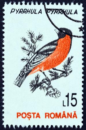 ROMANIA - CIRCA 1993: A stamp printed in Romania from the Birds  issue shows Eurasian bullfinch (Pyrrhula pyrrhula), circa 1993.