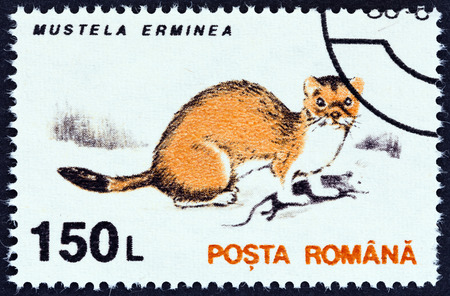 stoat: ROMANIA - CIRCA 1993: A stamp printed in Romania from theAnimals issue shows Stoat (Mustela erminea), circa 1993.