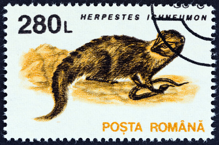 herpestidae: ROMANIA - CIRCA 1993: A stamp printed in Romania from the Animals issue shows Egyptian mongoose (Herpestes ichneumon), circa 1993.