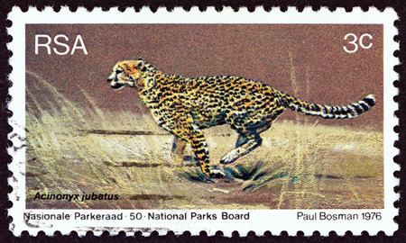 suid: SOUTH AFRICA - CIRCA 1976: A stamp printed in South Africa from the \World Environment Day\ issue shows Cheetah (Acinonyx jubatus), circa 1976.