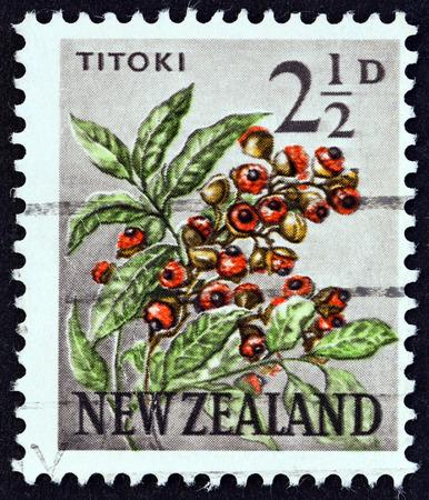 sello: NEW ZEALAND - CIRCA 1960: A stamp printed in New Zealand shows Titoki (Alectryon excelsum), circa 1960. Editorial
