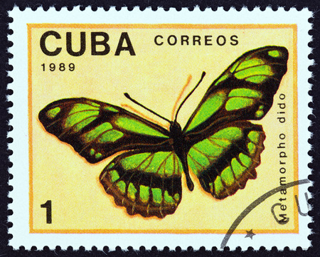 dido: CUBA - CIRCA 1989: A stamp printed in Cuba from the Butterflies  issue shows Dido Longwing (Metamorpha dido) butterfly, circa 1989. Editorial