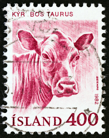 bos: ICELAND  CIRCA 1982: A stamp printed in Iceland from the Domestic Animals  issue shows Cattle Bos taurus circa 1982.