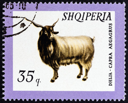estampilla: ALBANIA  CIRCA 1966: A stamp printed in Albania from the Domestic Animals  issue shows Wild Goat Capra aegagrus circa 1966.