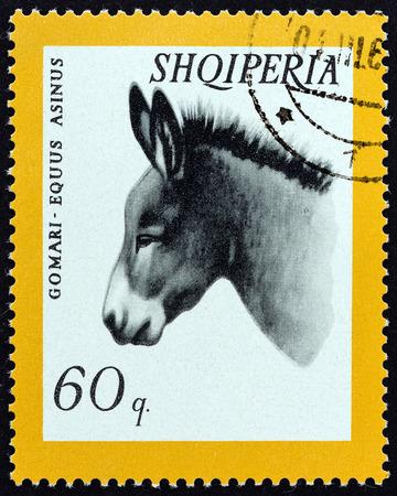 """jack ass: ALBANIA CIRCA 1966: Un timbro stampato in Albania dalla questione """"Animale domestico"""" mostra asinus Donkey Equus circa 1966."""