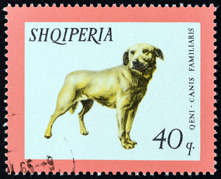 familiaris: ALBANIA  CIRCA 1966: A stamp printed in Albania from the Domestic Animals  issue shows Dog Canis familiaris circa 1966.