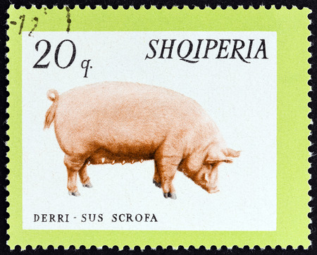 domesticus: ALBANIA  CIRCA 1966: A stamp printed in Albania from the Domestic Animals  issue shows Pig Sus scrofa domesticus circa 1966.