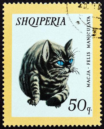 felis silvestris catus: ALBANIA  CIRCA 1966: A stamp printed in Albania from the Domestic Animals  issue shows Cat Felis catus circa 1966.