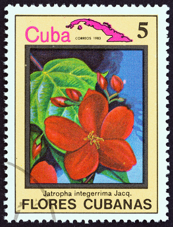 estampilla: CUBA  CIRCA 1983: A stamp printed in Cuba from the Cuban flowers issue shows Jatropha integerrima circa 1983.