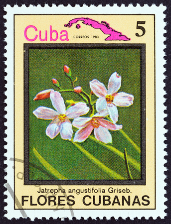 estampilla: CUBA  CIRCA 1983: A stamp printed in Cuba from the Cuban flowers issue shows Jatropha angustifolia circa 1983. Editorial