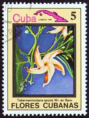 estampilla: CUBA  CIRCA 1983: A stamp printed in Cuba from the Cuban flowers issue shows Tabernaemontana apoda circa 1983. Editorial