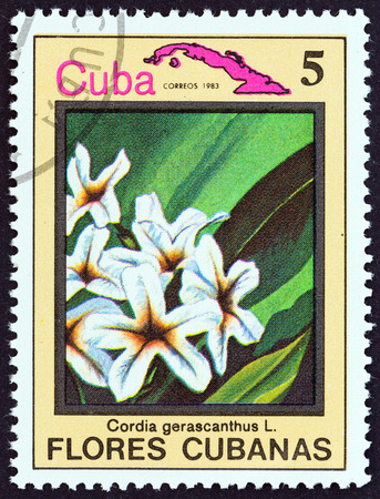 estampilla: CUBA  CIRCA 1983: A stamp printed in Cuba from the Cuban flowers issue shows Cordia gerascanthus circa 1983.