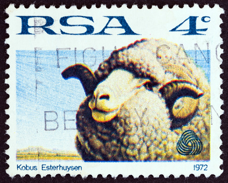 suid: SOUTH AFRICA  CIRCA 1972: A stamp printed in South Africa from the Sheep and Wool Industry issue shows a sheep circa 1972. Editorial