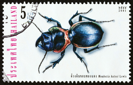 carabidae: THAILAND  CIRCA 2001: A stamp printed in Thailand from the Insects  issue shows Mouhotia batesi circa 2001.