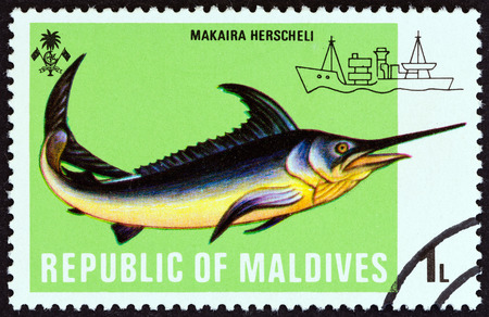 indian postal stamp: MALDIVES  CIRCA 1973: A stamp printed in Maldives from the Fishes  issue shows Marlin Makaira herscheli circa 1973. Editorial