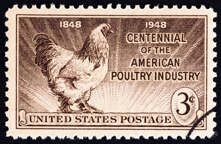 sello: USA - CIRCA 1948: A stamp printed in USA issued for the centenary of American Poultry Industry shows Light Brahma Rooster, circa 1948.