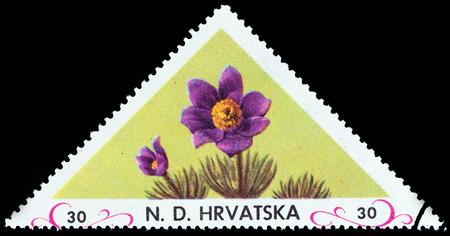 unofficial: CROATIA - CIRCA 1952: An unofficial stamp printed in Croatia shows flower, circa 1952. Editorial