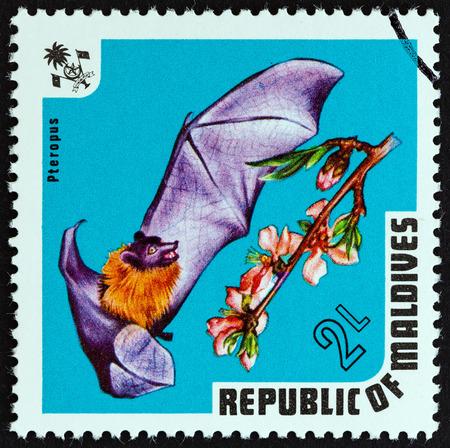 """pteropus: MALDIVE - CIRCA 1973: Un timbro stampato in Maldives dalla questione """"Fauna"""" mostra indiano Pteropus Ariel, circa 1973. Editoriali"""