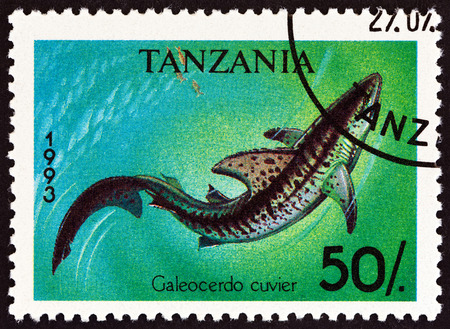 estampilla: TANZANIA - CIRCA 1993: A stamp printed in Tanzania from the Sharks  issue shows  Tiger shark Galeocerdo cuvier, circa 1993.