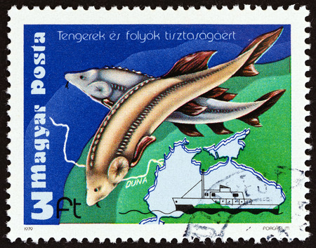 environmental issue: HUNGARY - CIRCA 1979: A stamp printed in Hungary from the Environmental Protection of Rivers and Seas  issue shows Sturgeon, Cousteaus Ship Calypso and Black Sea, circa 1979.