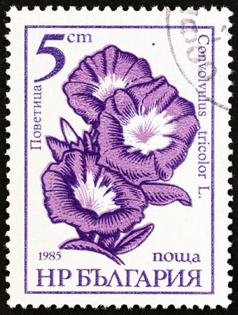 estampilla: BULGARIA - CIRCA 1985: A stamp printed in Bulgaria from the Flowers  issue shows Morning glory Convolvulus tricolor, circa 1985.