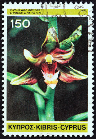 kibris: CYPRUS - CIRCA 1981: A stamp printed in Cyprus from the Cypriot Wild Orchids issue shows Epipactis veratrifolia, circa 1981.