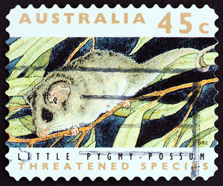 estampilla: AUSTRALIA - CIRCA 1992: A stamp printed in Australia from the Threatened Species  issue shows Little pygmy-possum Cercartetus lepidus, circa 1992.