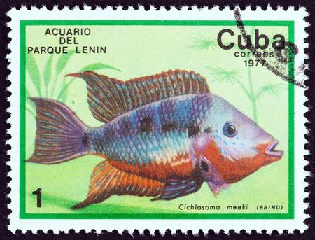 CUBA - CIRCA 1977: A stamp printed in Cuba from the Fish in Lenin Park Aquarium, Havana issue shows a Firemouth cichlid Thorichthys meeki, circa 1977.