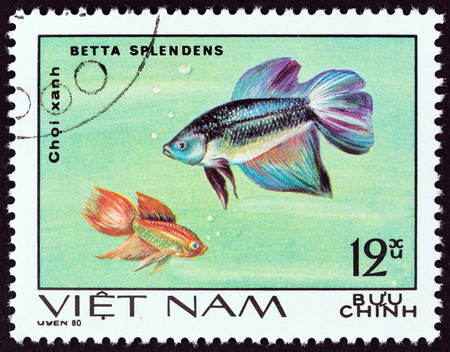 estampilla: VIETNAM - CIRCA 1981: A stamp printed in Vietnam from the Aquarium Fish  issue shows Siamese fighting fish Betta splendens, circa 1981. Editorial