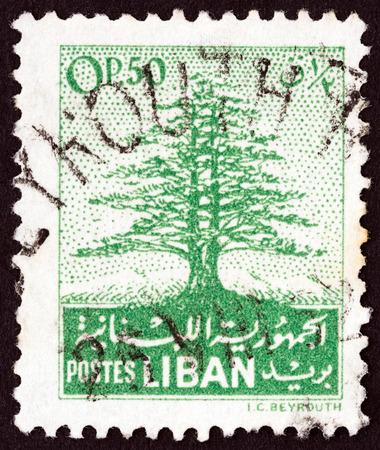 cedar tree: LEBANON - CIRCA 1952: A stamp printed in Lebanon shows Cedar of Lebanon, circa 1952.