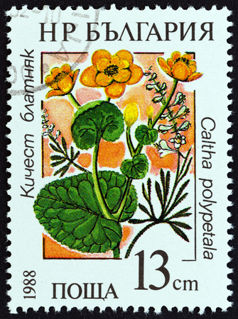 estampilla: BULGARIA - CIRCA 1988: A stamp printed in Bulgaria from the Marsh Flowers  issue shows Caltha polypetala, circa 1988.