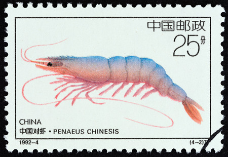 estampilla: CHINA - CIRCA 1992: A stamp printed in China from the Offshore Breeding Projects  issue shows Chinese white shrimp (Penaeus chinensis), circa 1992.