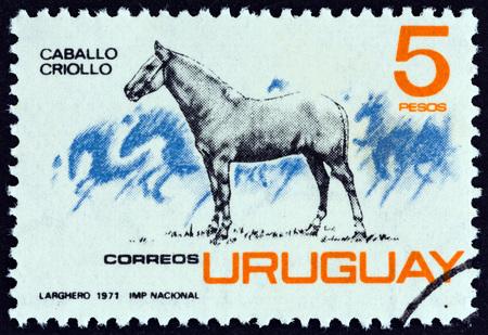 URUGUAY - CIRCA 1971: A stamp printed in Uruguay shows Criollo horse, circa 1971.